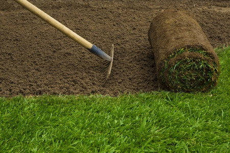 new sod grass watering tips